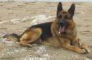 lina_lina - éleveur canin Dogzer