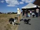 EasyShelty - éleveur canin Dogzer