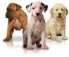 ganver14 - éleveur canin Dogzer