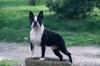 floflo58 - éleveur canin Dogzer