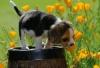 ganoutte - éleveur canin Dogzer