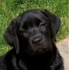 indra91 - éleveur canin Dogzer