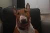 Morgan - éleveur canin Dogzer