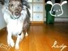 lady-dog191