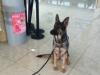 cassou1 - éleveur canin Dogzer