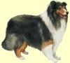 Danette-x3 - éleveur canin Dogzer