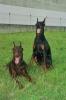 nath65 - éleveur canin Dogzer