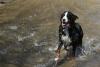 cath100 - éleveur canin Dogzer