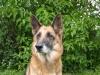 titisse - éleveur canin Dogzer