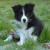 Lilou259 - éleveur canin Dogzer