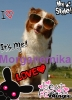 morganemika - éleveur canin Dogzer