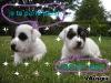 trisdor1 - éleveur canin Dogzer