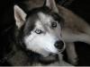 titeinconnue - éleveur canin Dogzer