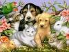 sarah-2000_be - éleveur canin Dogzer