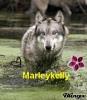 marleykelly - éleveur canin Dogzer