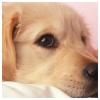Jesse44465 - éleveur canin Dogzer