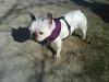 gaya33277 - éleveur canin Dogzer