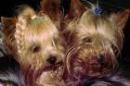 Lisa771 - éleveur canin Dogzer