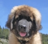 sarah.wacker - éleveur canin Dogzer