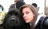 Frisonne56 - éleveur canin Dogzer