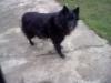 tiphaine09 - éleveur canin Dogzer