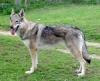 kasandrals - éleveur canin Dogzer