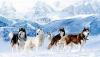 kayla67 - éleveur canin Dogzer