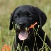 paul-hady - éleveur canin Dogzer