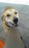 onyxcheri - éleveur canin Dogzer