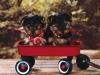 joliejadou1 - éleveur canin Dogzer