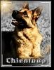 chienloup - éleveur canin Dogzer