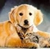zazounette - éleveur canin Dogzer