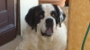 gwendo24 - éleveur canin Dogzer