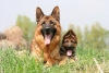lyly09 - éleveur canin Dogzer