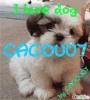 CACOU07 - éleveur canin Dogzer