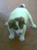Cresis - éleveur canin Dogzer