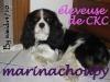 MarinaChoupy - éleveur canin Dogzer
