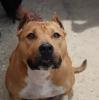 lolita66000 - éleveur canin Dogzer