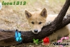 lova1312 - éleveur canin Dogzer