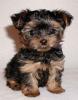 maudettedu38 - éleveur canin Dogzer