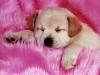 jodiestyliste - éleveur canin Dogzer