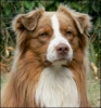 rym963 - éleveur canin Dogzer