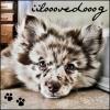 iilooovedooog - éleveur canin Dogzer