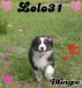 lolo31 - éleveur canin Dogzer