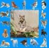clemence2010 - éleveur canin Dogzer