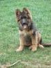 taupe - éleveur canin Dogzer