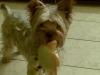 discolove - éleveur canin Dogzer
