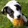 titix666 - éleveur canin Dogzer