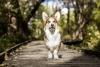 Akusu - éleveur canin Dogzer