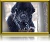 TaraJean - éleveur canin Dogzer